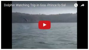 Video of Dolphine Trip in Goa